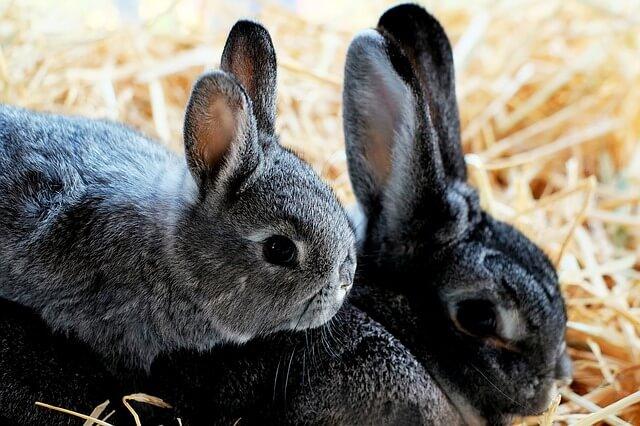 Zwei glückliche Kaninchen genießen eine artgerechte Kaninchenhaltung