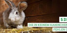 Den Kaninchenstall richtig einrichten