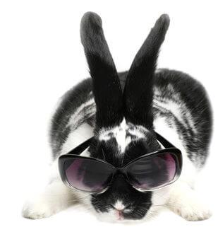 Kaninchen mit Sonnenbrille