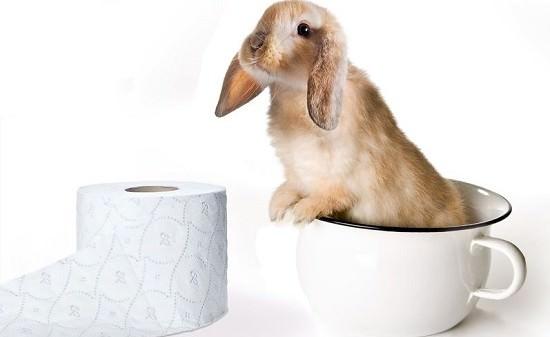 stubenreinheit bei kaninchen tipps und tricks f r ein. Black Bedroom Furniture Sets. Home Design Ideas