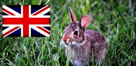 Kaninchenstall auf Englisch - Eine Übersetzung