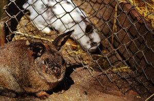 Kaninchen sitzt in einem XXL Stall