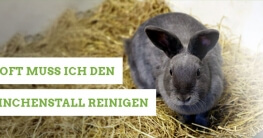 Wie oft muss man den Kaninchenstall reinigen?