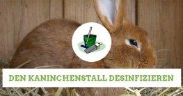 kaninchenstall-desinfizieren